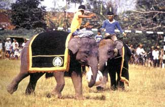 sepak bola gajah
